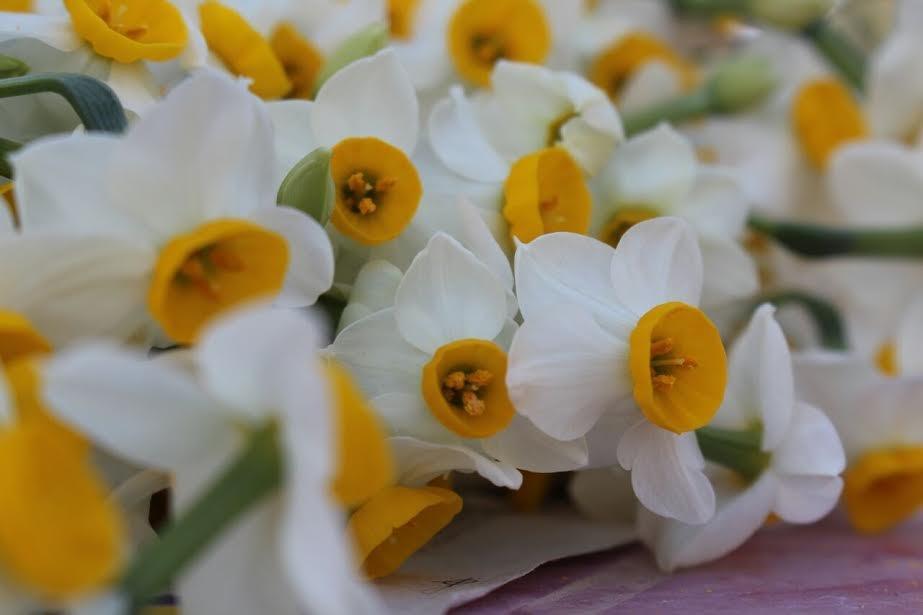 تور یکروزه بهبهان گردی؛از سفر به ارجان تا حضور درجشنواره گل نرگس